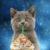 :iconstarbucksgalaxy: