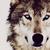 :iconstarwolf7070: