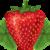 :iconstirfried-strawberry: