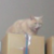 :iconstrawberry-the-cat: