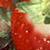 :iconstrawberrycheerios: