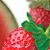 :iconstrawberrywatermelon: