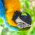 :iconstrongestbird: