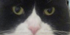:iconstunninglysurreal: