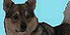:iconswedish-vallhunds: