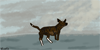 :iconswiftmoon-kennels: