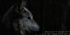 :iconswiftriverwolfpack: