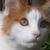 :iconswifty-kitty: