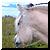 :icontazgold-equines:
