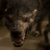 :iconteenwolftrue: