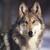 :icontehwolf121: