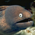 :iconthats-a-moray: