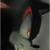 :iconthe-black-hedgehog: