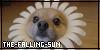 :iconthe-falling-sun: