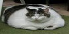 :iconthe-fat-cats: