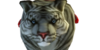 :iconthe-guardian-tigers: