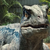 :iconthe-last-raptor: