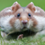 :iconthe-mouse-republic: