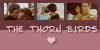 :iconthe-thorn-birds: