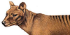 :iconthe-thylacine: