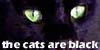 :iconthecatsareblack: