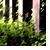 :iconthegreenfield: