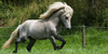 :icontheicelandichorse: