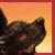 :icontheindigowolf: