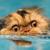 :iconthepuddlecat: