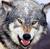 :iconthereallonewarwolf: