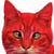 :icontheredcatxd2: