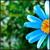 :iconthesefadingcolors: