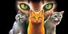 :iconthewarriorcats101: