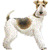 :iconthewirefoxterrier: