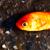 :iconthinking-fishstock: