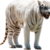 :icontigress02: