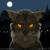 :icontjwolf50: