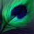 :icontooks-peacockfox: