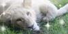 :icontoronto-zoo-lovers:
