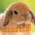 :icontrinity-fox:
