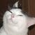 :icontrollface-cat: