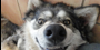 :icontruth-about-wolfdogs: