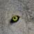 :icontsuki-moonwolf:
