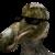 :icontyrannosaurusrex-123: