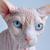 :iconuglycat13: