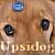 :iconupsidog: