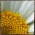 :iconvamaena: