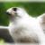 :iconvera-falcon: