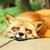 :iconveta-fox: