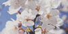 :iconvintagecams-flowers: